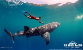 Jawai and the Whale Shark from Journey To The South Pacific currently showing at the Tennessee Aquarium's IMAX Theater.