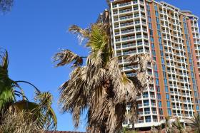 This Washingtonia Palm still has a few green fronds.