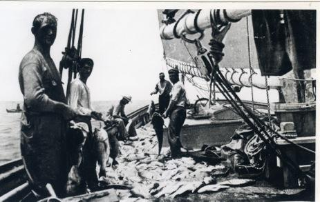 Pensacola red snapper fishermen with a huge catch of fish on a fishing schooner