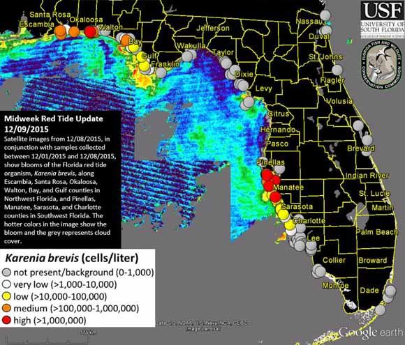 Another Red Tide Alert For Nwfl Waters Wuwf