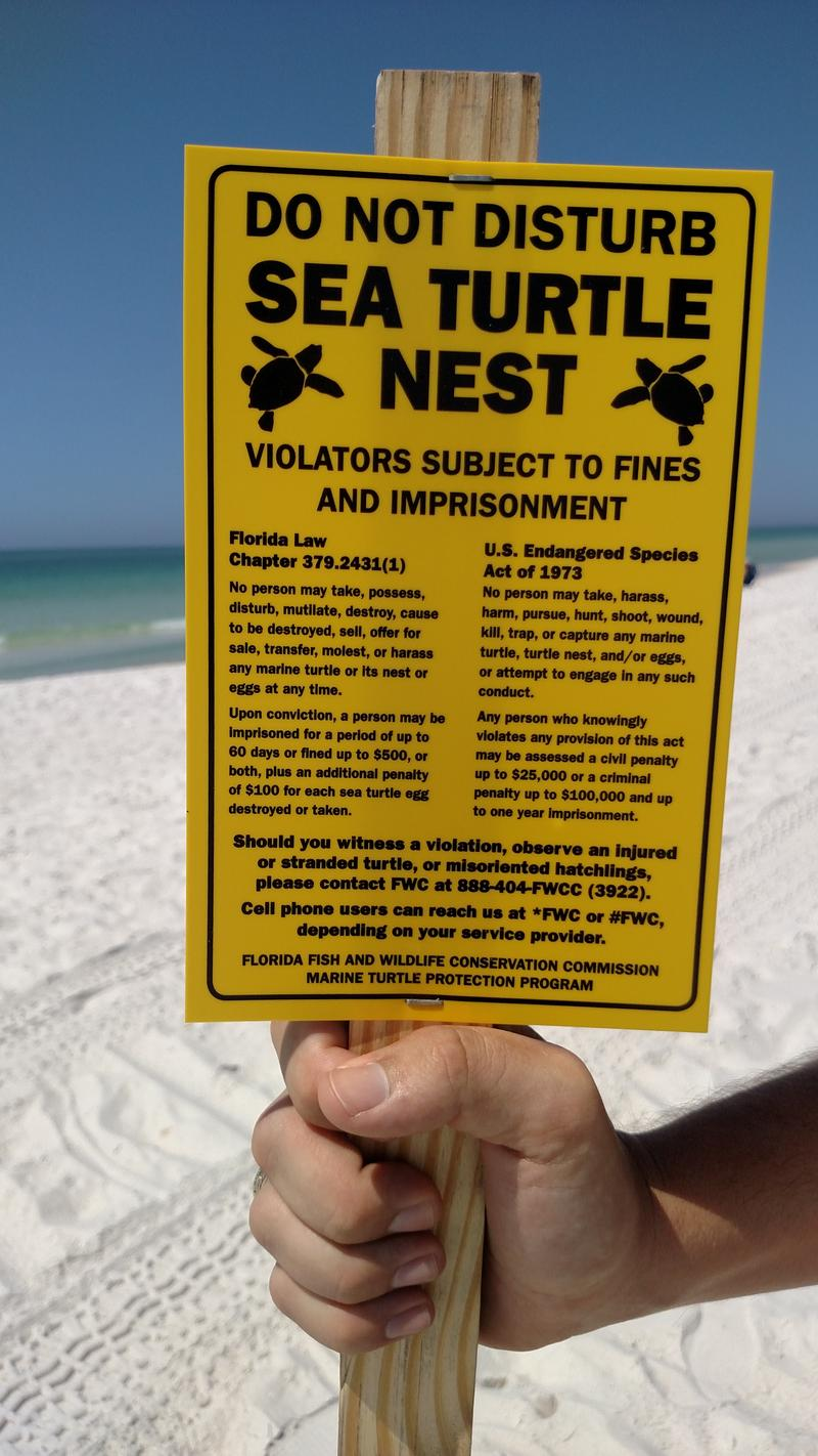 Signs like this will mark the spot of sea turtle nests at the National Seashore, Pensacola Beach, and throughout Florida.