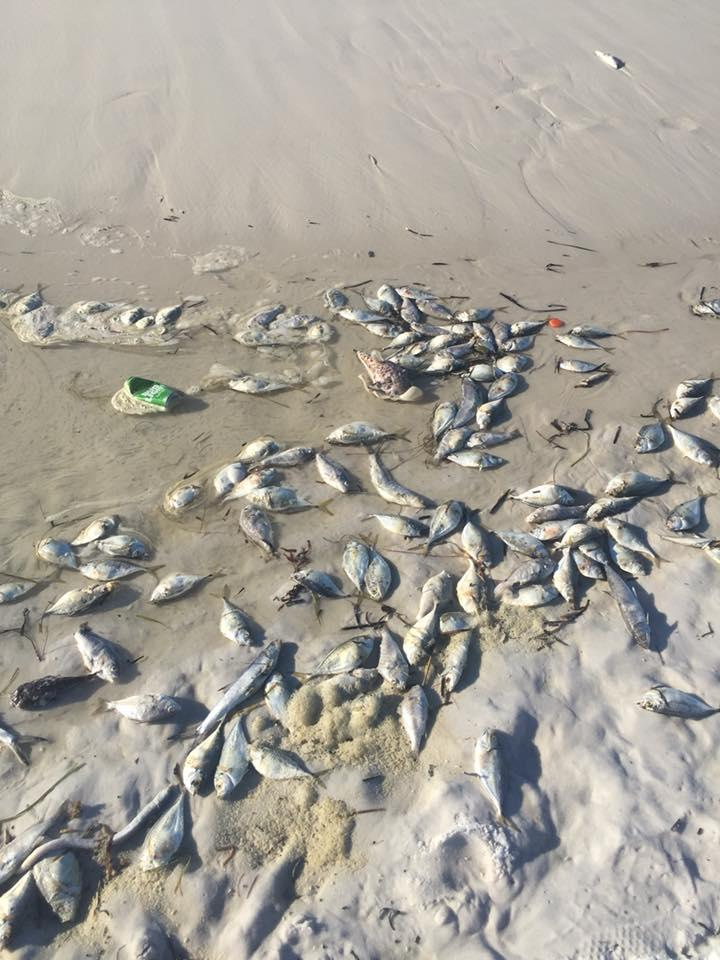 Florida Fish and Wildlife Conservation Commission is constantly collecting water samples for red tide blooms.