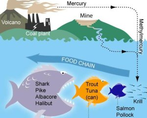 Study mercury has fast path into fish but there 39 s hope for Where does mercury in fish come from
