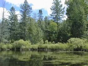 Region 9 of the US Forest Service includes forests and tallgrass prairies in 20 states, including Wisconsin's Chequamegon-Nicolet National Forest.