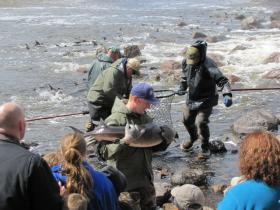 WUWM's Susan Bence takes us to the front lines of the effort to restore Wisconsin's sturgeon population.