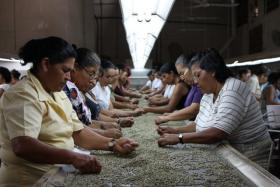 Coffee farm in El Salvador.