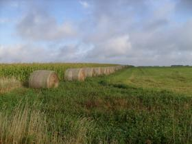 UW Extension expert says corn and soybeans can hold on a little bit longer, but rain is critical to a successful crop.
