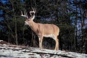 Act 168 will widen scope for deer hunting enthusiasts.