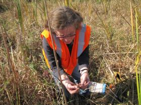 Biologist Alice Thompson examines fresh wet meadows' soils in the field.