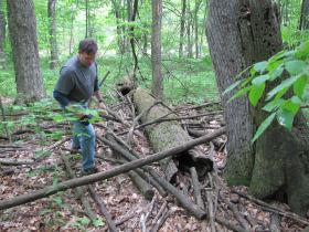 "Andrew Struck searches for salamander that briefly appeared within the white oak that now ""enriches"" the forest floor."