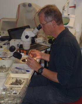Molloy dissecting haplosporidian-infected zebra mussels in France.