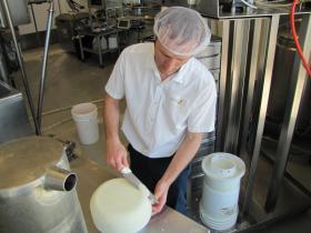 Henningfeld slices sample of goat milk cheddar.