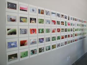 One hundred photos Cho culled from thousands of photos taken over one year.