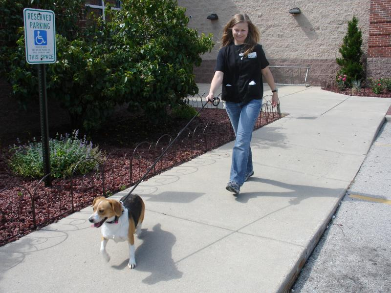A Beagle Takes Its First Walk After Growing Up In A Cage