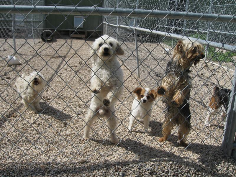 Cluster of Dogs in Outdoor Run at Puppy Haven