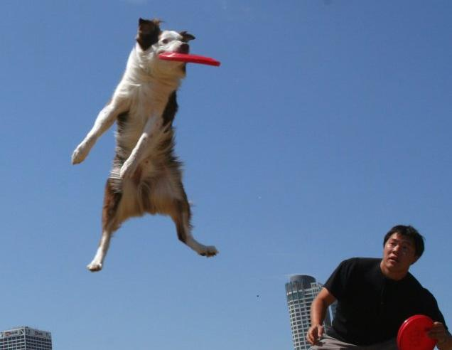 Andrew Han and his dog Solar demonstrate one of their eye-catching maneuvers.