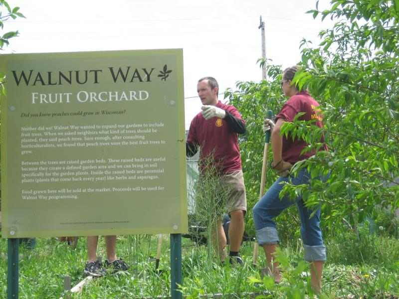 Rotaract volunteers, including Club President Michael Scheer (center), help weed the Walnut Way fruit orchard and vegetable garden.