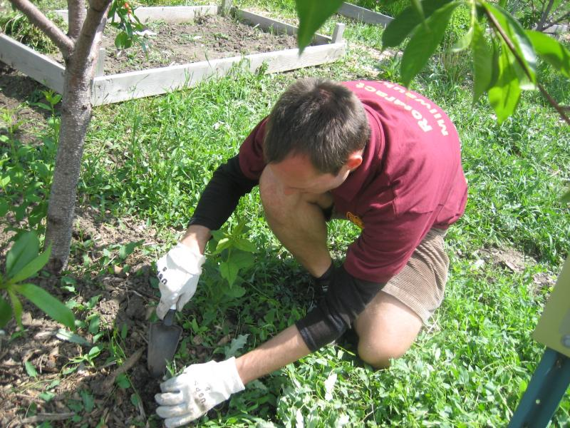 Milwaukee's Rotaract Club President Michael Scheer works on a particularly tough weed in the Walnut Way community garden. He says he observes racial segregation as he volunteers throughout the city.