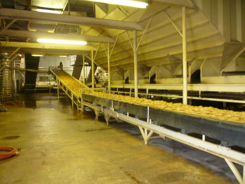 The potatoes move along the conveyor belt, at a fairly rapid clip, to be loaded into the truck for shipment.
