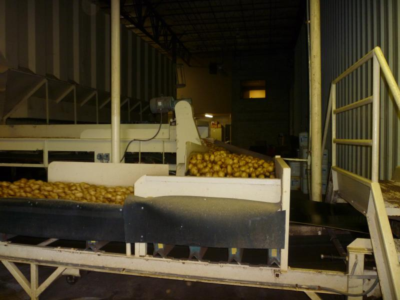 The potatoes move along a conveyor belt from the storage bins to make their way into the trucks to be shipped.