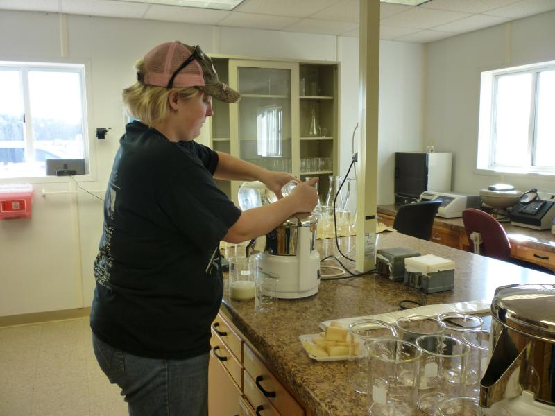 Using a juicer, researchers at the Hancock Agricultural Research Station will analyze the potato's juice for levels of sucrose and glucose. Sucrose determines how long a potato will store; glucose, the potatoes color.