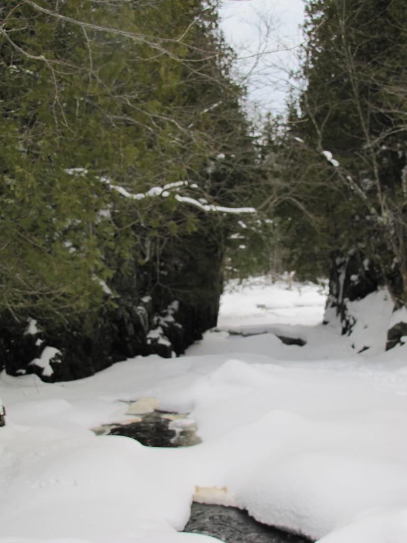 Tyler Forks River