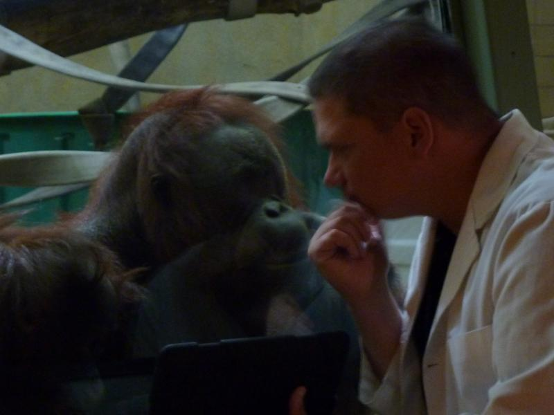 volunteer Scott Engel has a special bond with the zoo's orangutans. He says the trick to keeping them interested is to keep the iPad content novel and new.