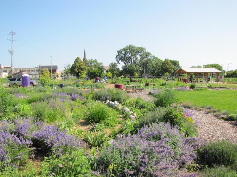 Alice's Garden in Lindsay Heights neighborhood has a head start on HOME GR/OWN strategies.