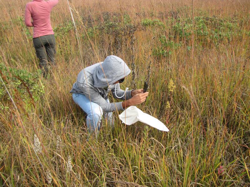 Ruben Dario Palacio captures prairie flora