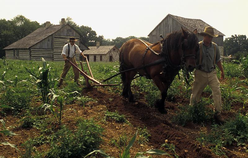 Interpreters plow fields with horses at Old World Wisconsin