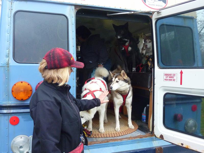 Executive director Bonnie Ulrich greets some of the sled dogs.