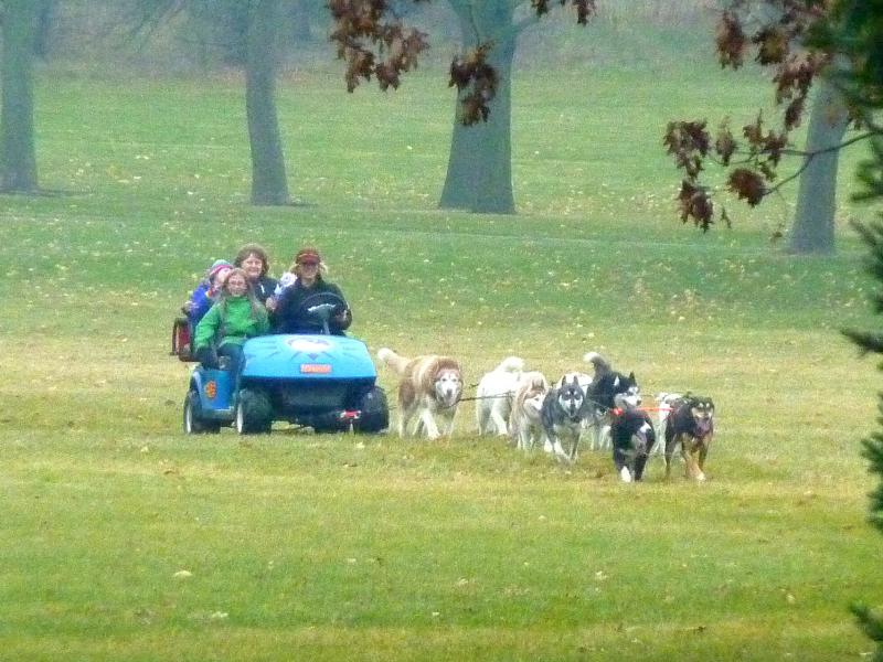 The Door County Sled Dogs train and give rides on their all-terrain golf cart in Milwaukee's Kletzsch Park.