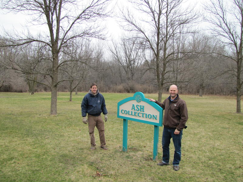 Gregg Collins & Ramsey Radakovich at Whitnall Park.  A cluster of ash tree are being treated in order to maintain samples of the species.