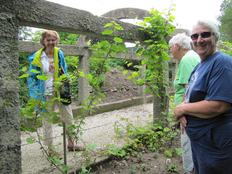 Chatting among the grape vines.  The arbor dates back more than a century.  Its revitalization is part of the Sisters' sustainability plan.