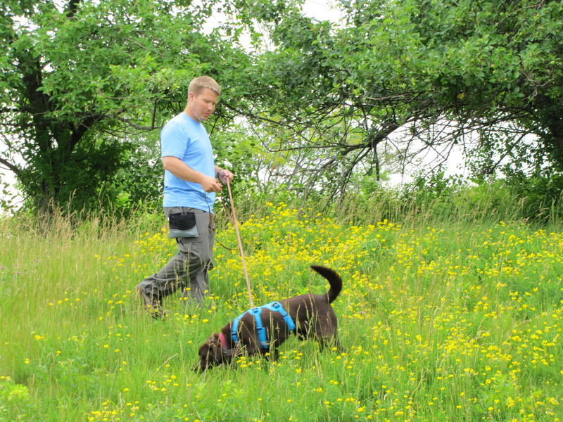 Tilia and Cory Gritzmacher are training to work as a team to sniff out species.