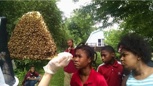 Young Farmers participants inspect a beehive
