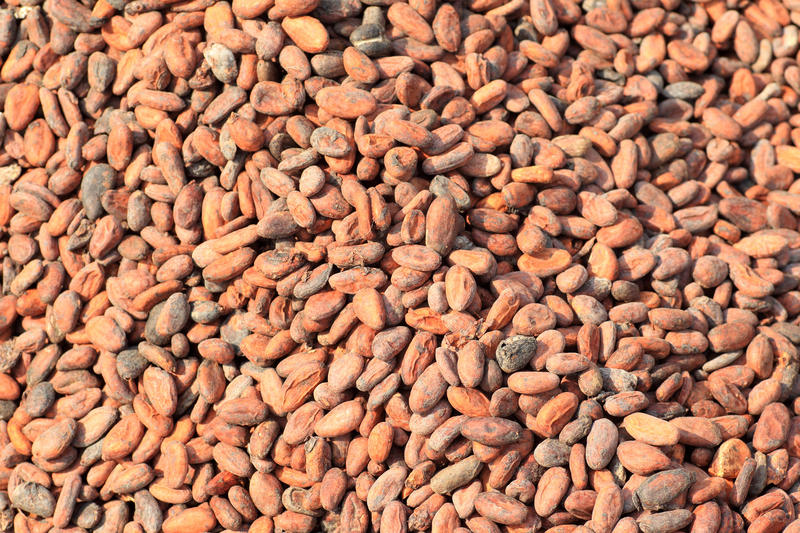 Cacao beans in Ghana, West Africa.