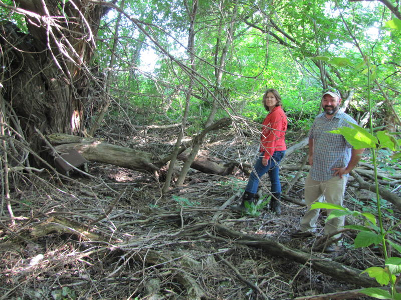 Recreating a functional wetland requires teamwork -including DNR's Stacy Hron and Benji Timm with the City of Milwaukee.
