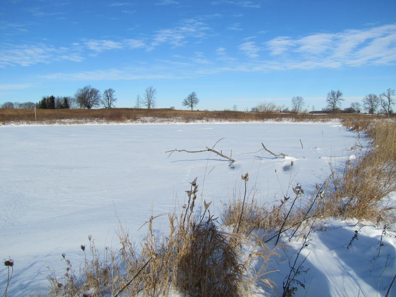 Protected wetland north of Port Washington not far from Lake Michigan