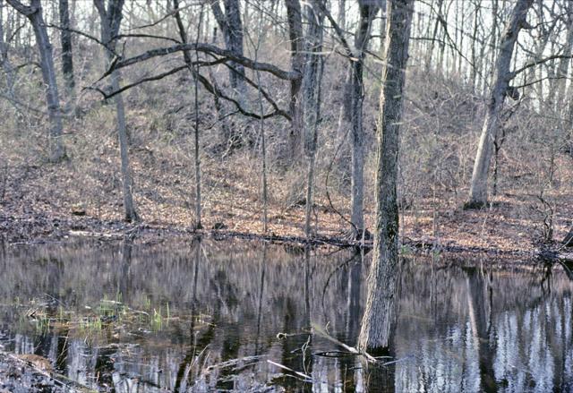 Ephemeral wetland in southeast Wisconsin