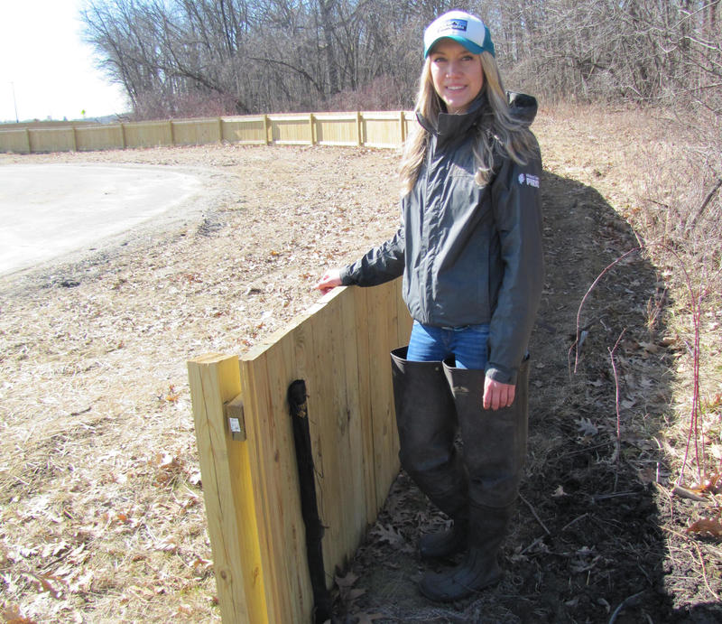 Julia Robson next to the amphibian exclusion barrier she hopes protects tiger salamanders that breed in adjacent Falk Park.