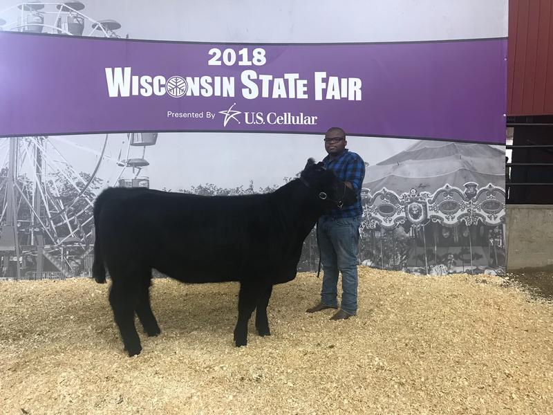 Senior Nathan Hawkins showed Violet, one of Vincent's two heifers at state fair. Hawkins plans to study veterinary medicine.