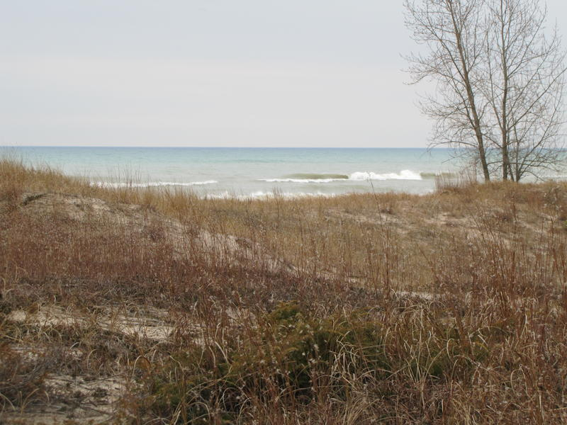 A view of Lake Michigan from Kohler Andre State Park.  Some fear the proposed golf course just north of the park will destroy an important dune-wetland system unique to the Great Lakes.
