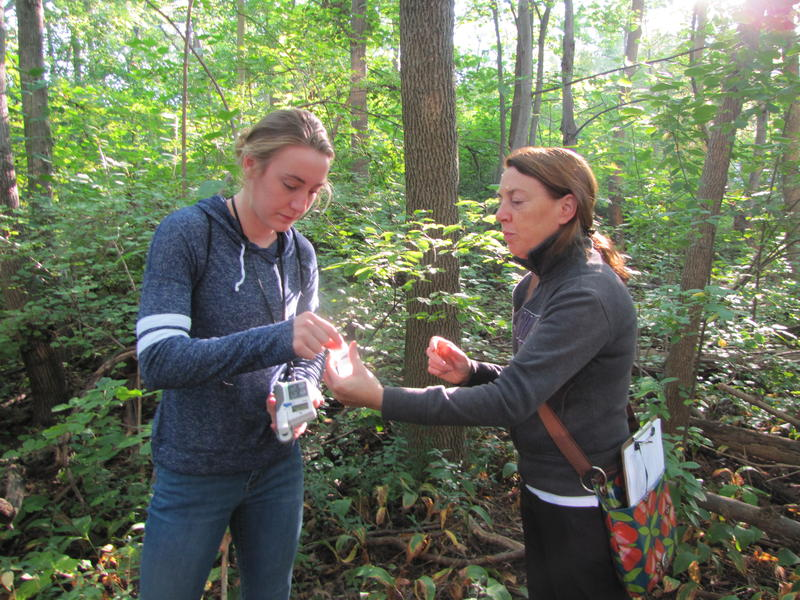 Graduate student Chloe Rehberg and ecologist Alison Donnelly monitor and take samples of shrub leaves in Downer Woods on the UWM campus.