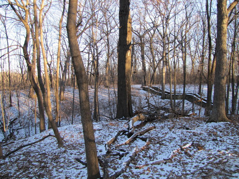 Wauwatosa residents often walk their dogs and jog in sanctuary woods. And wildlife biologists have been surprised by the number of species found here.