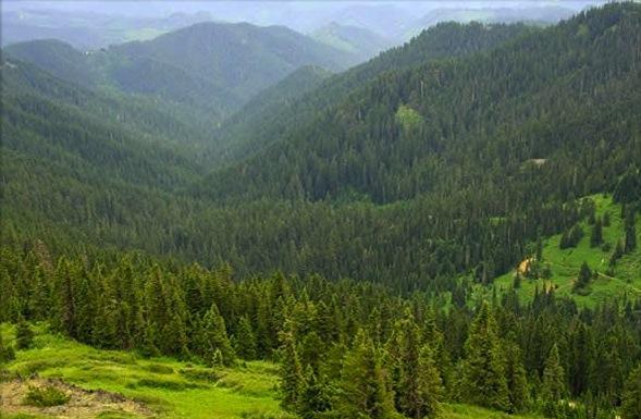 Umpqua National Forest in Oregon