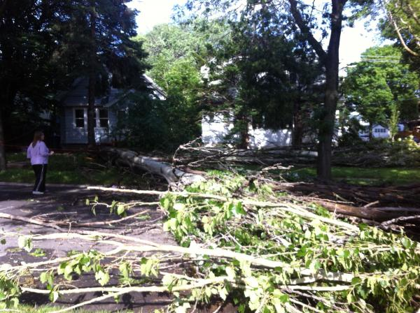 Trees fell on power lines, homes and vehicles. This one blocked a roadway in Milwaukee's Uptown Crossing neighborhood.