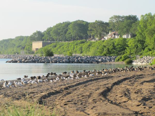 A busy bird day at South Shore