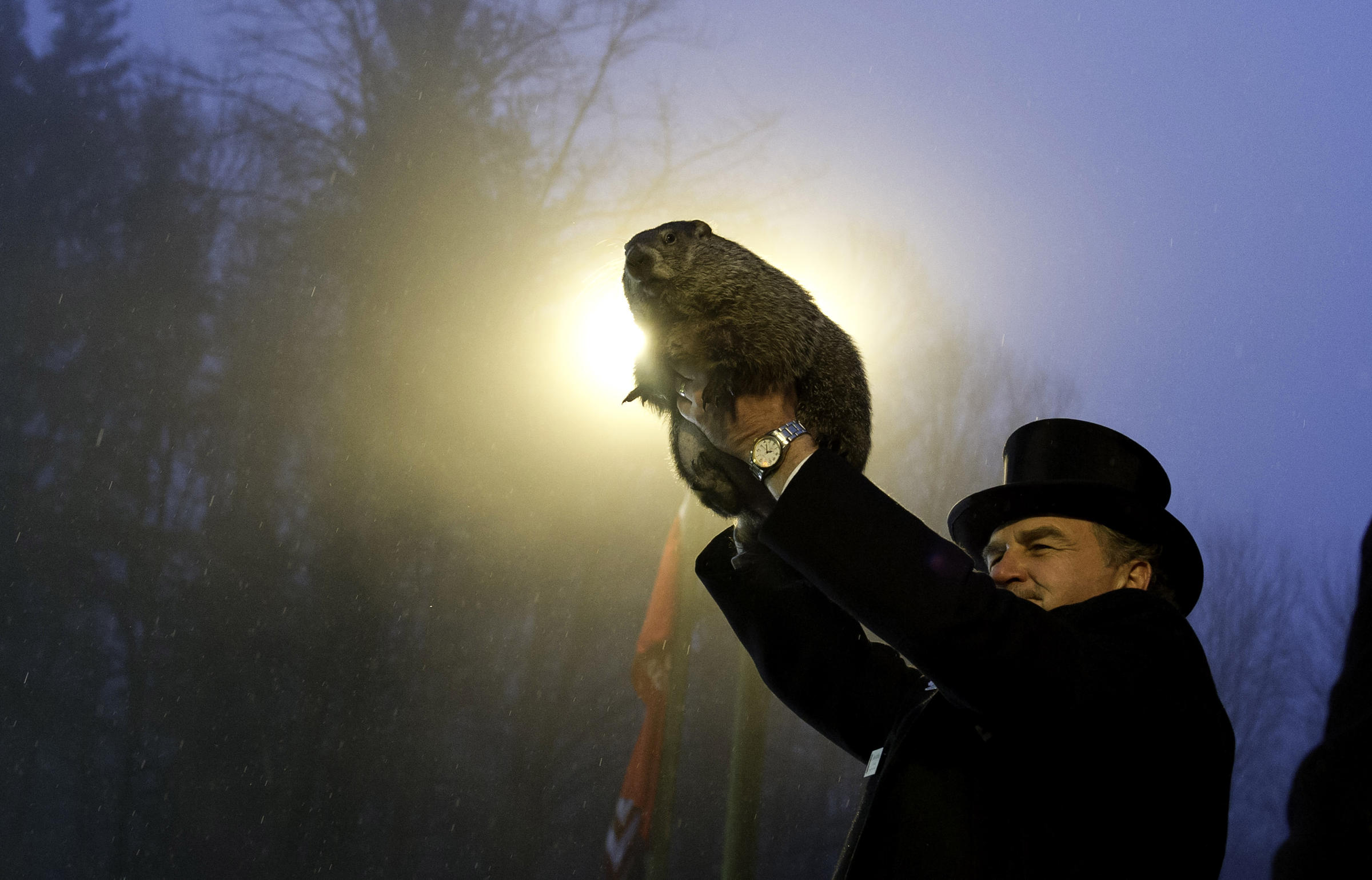 essay groundhog day wuwm groundhog handler john griffiths holds punxsutawney phil during the annual groundhog day festivities