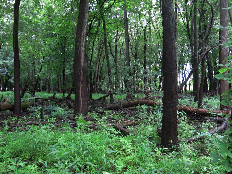 Forest at the Milan Bottoms Preserve